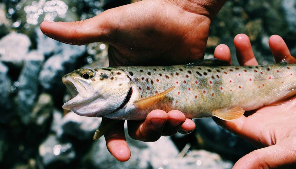 trout ponds