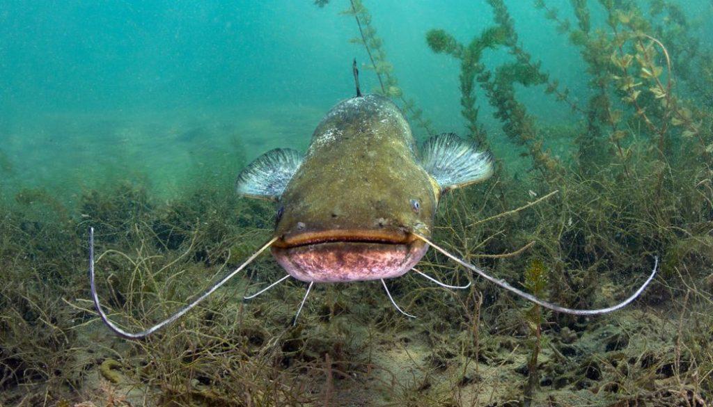 catfish time