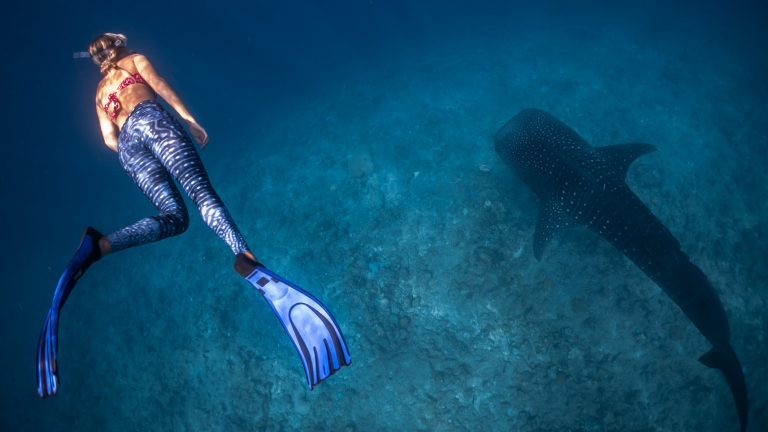 freediving fins