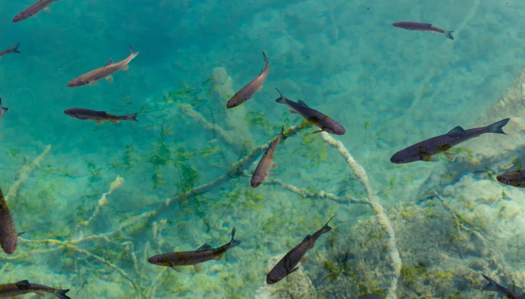 lake trout trolling speed