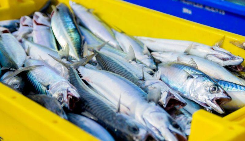 mackerel lures