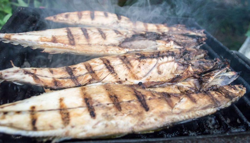 spanish mackerel good to eat