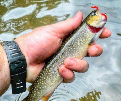 trout line