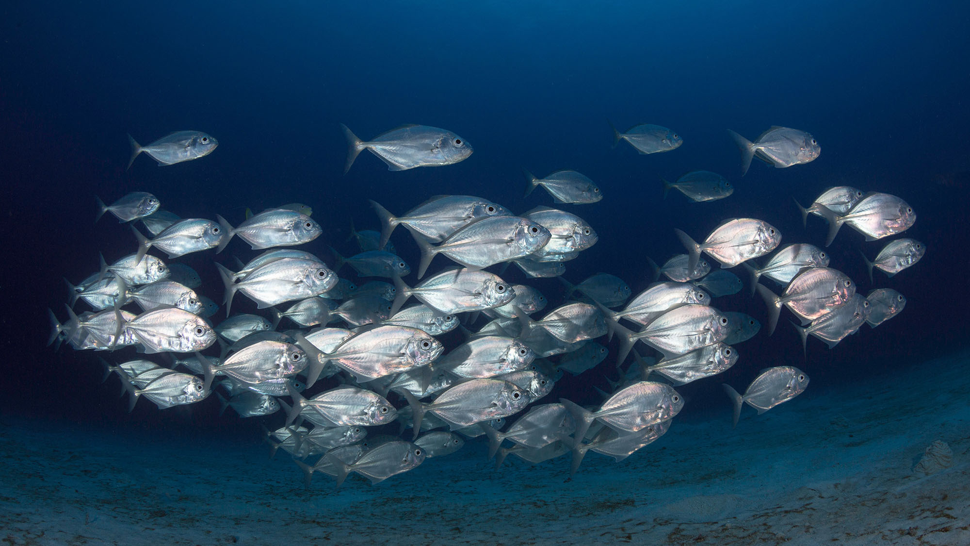 Best Lures for Giant Trevally