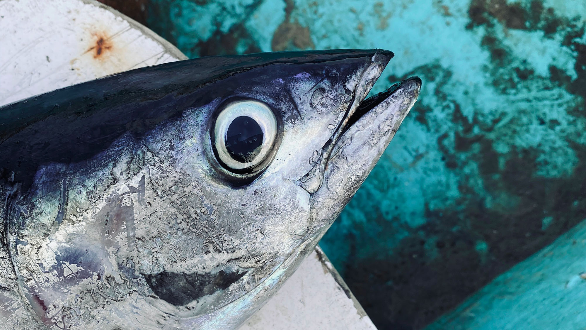 Best Lures for Big Eye Tuna
