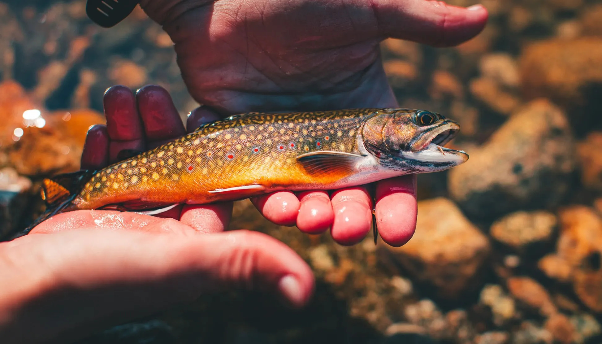 Best Lures for Stocked Trout