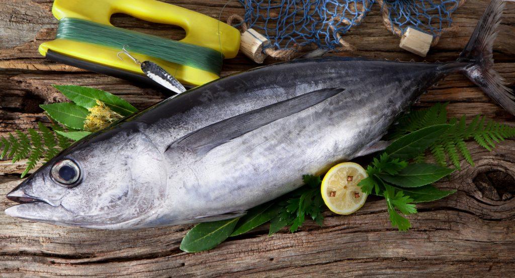 Albacore caught