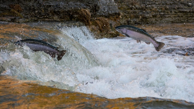 best conditions for salmon fishing