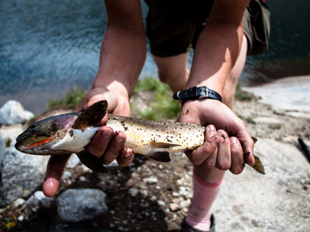 Holding a Cutthroat Trout