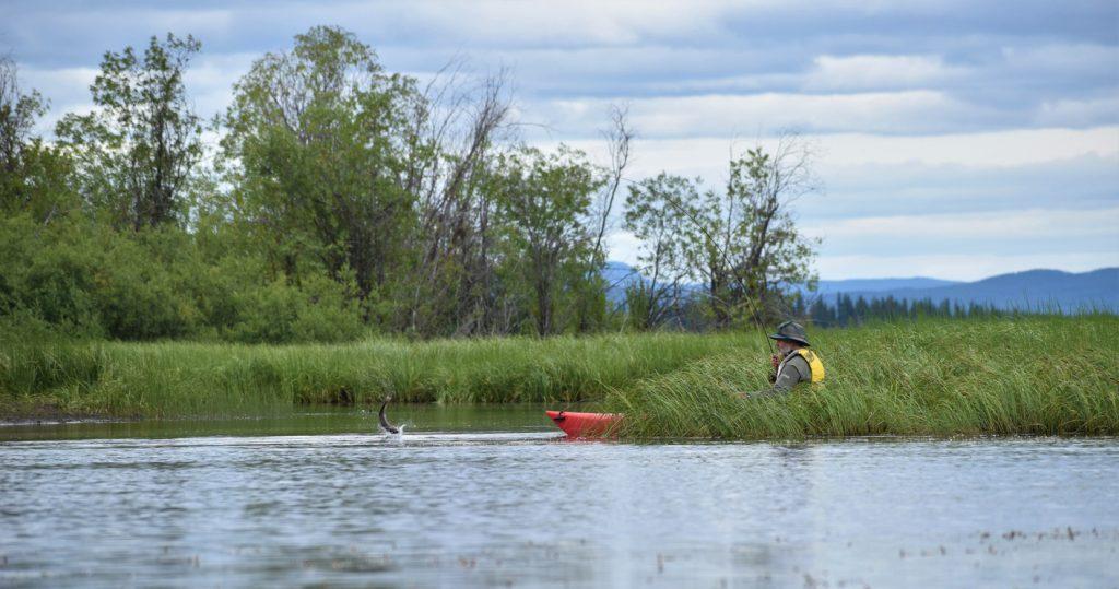 Older caucasian man kayak fishing, fish jumping.