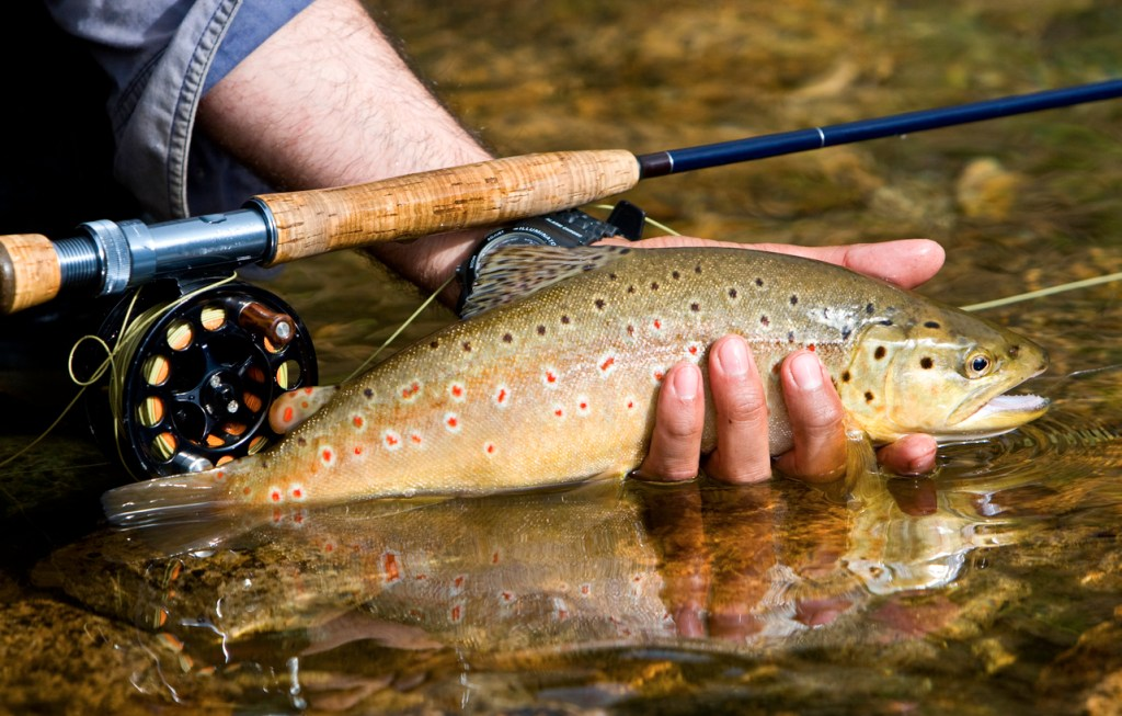 hand holding a brown trout