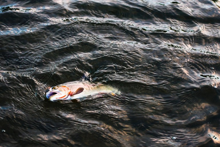 how to catch cutthroat trout in a lake