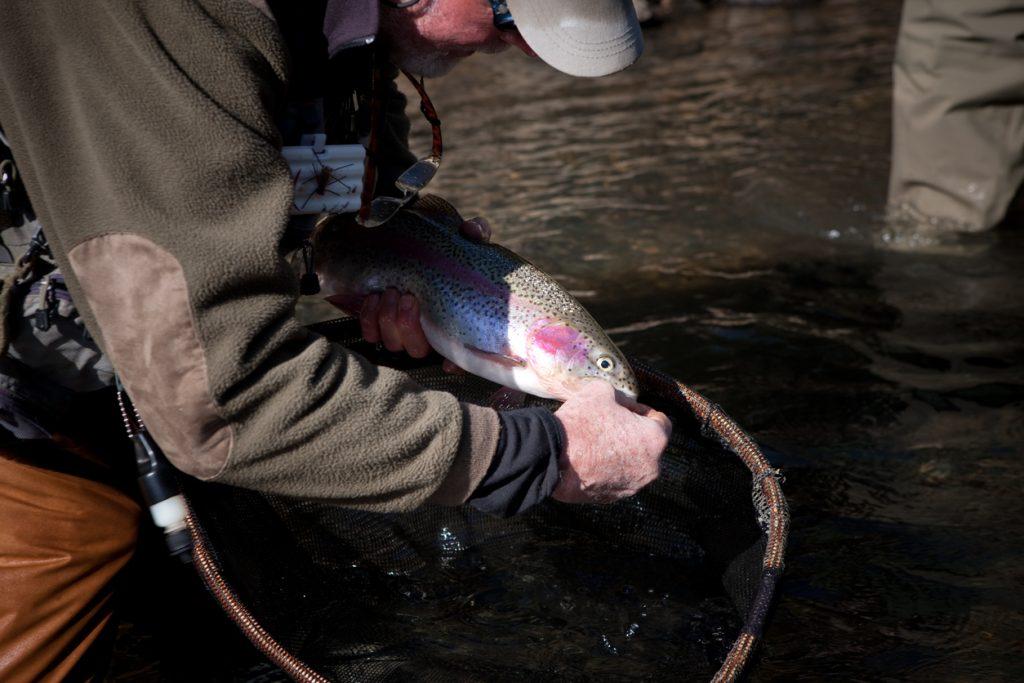 unhooking large trout
