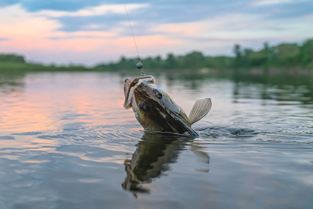 caught walleye