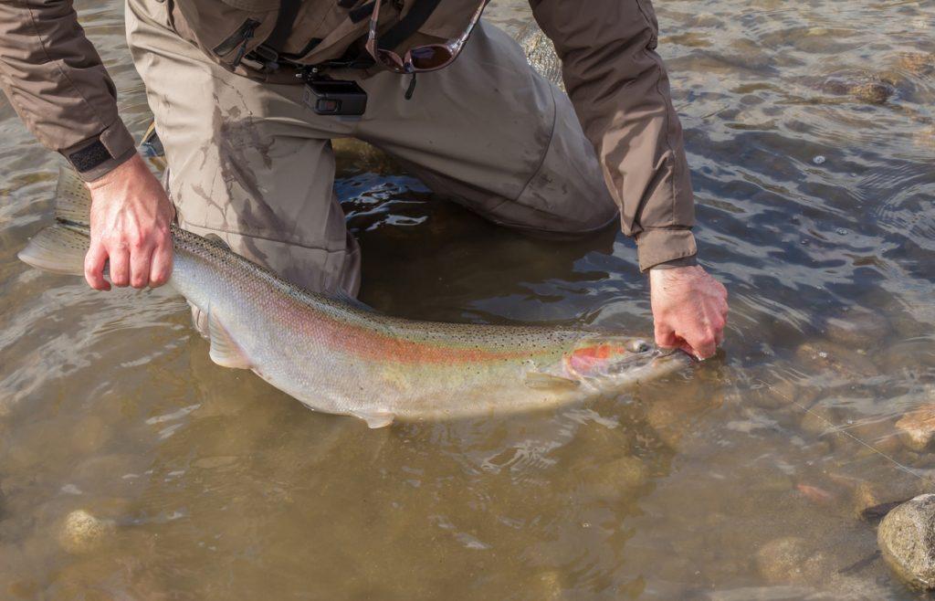 grabbing fish by tail